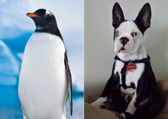penguin-dog